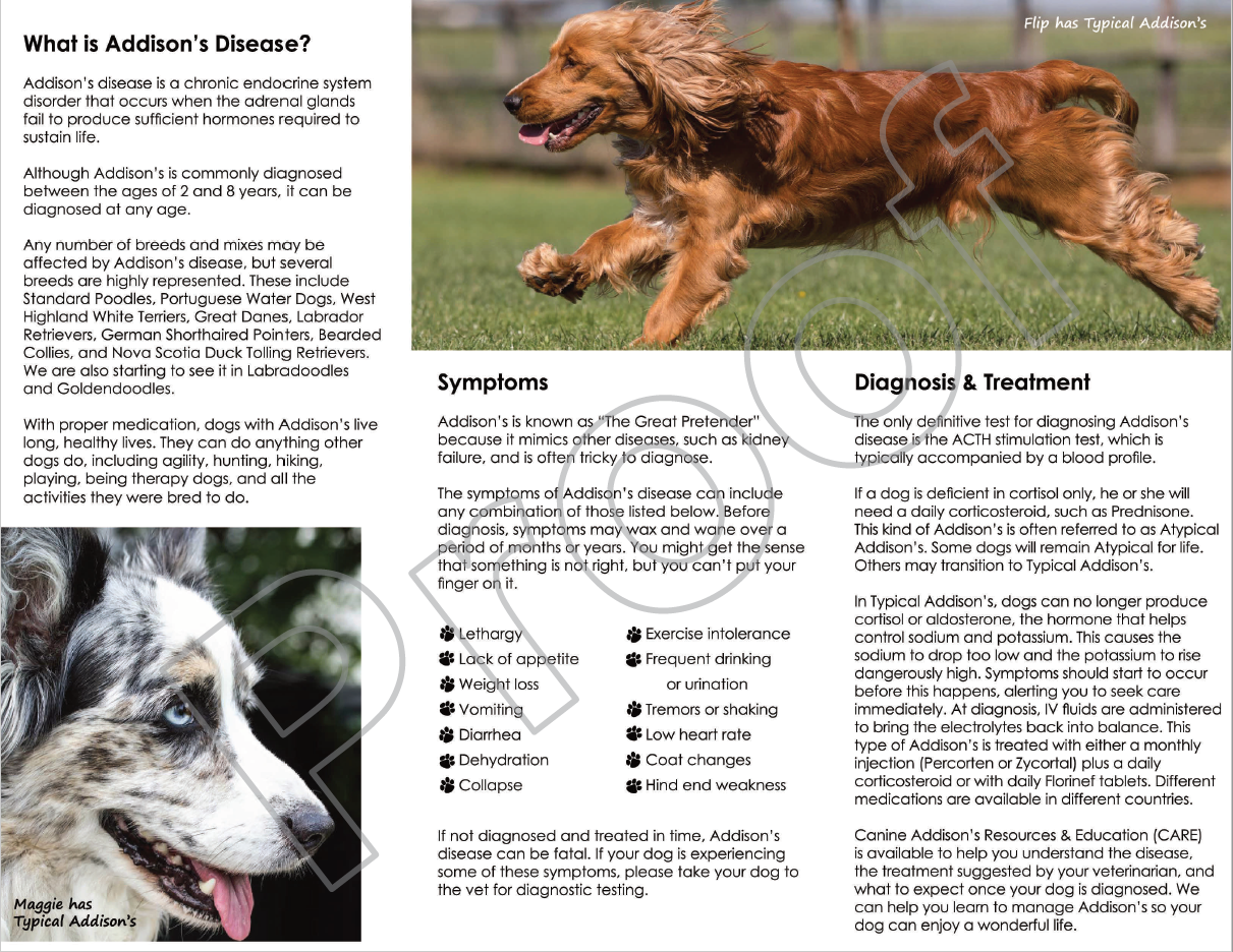 Brochure Canine Addison S Resources Education Care